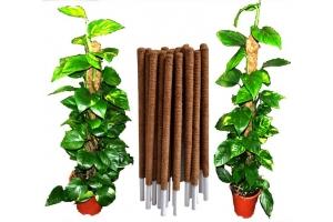 Coco coir pole